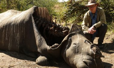 Saving Africa's Elephants: Hugh and the Ivory War