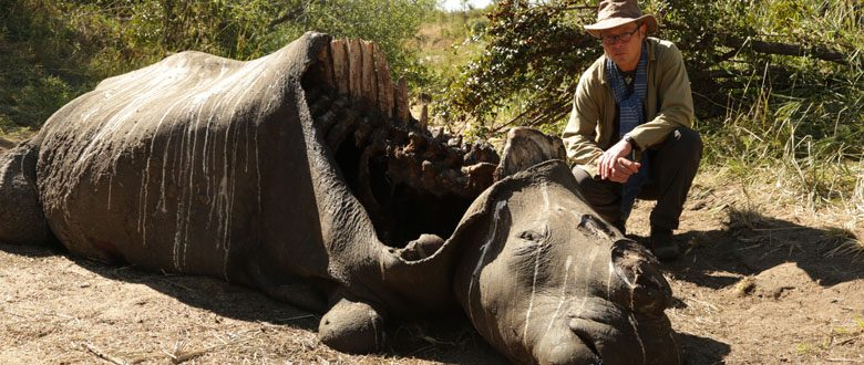 Saving Africa's Elephants Hugh and the Ivory War